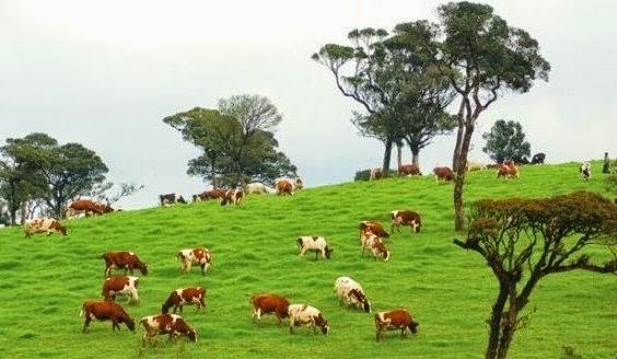 Care au fost caracteristicile aparatelor de muls vaci timpurii?